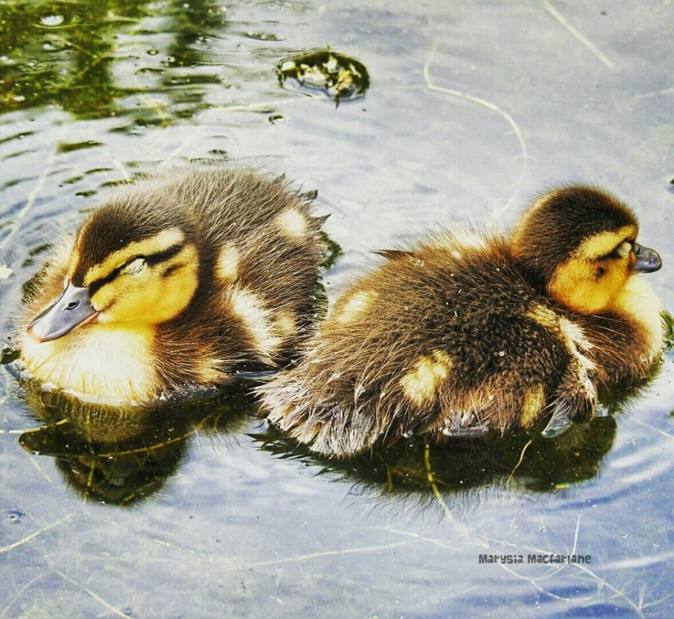 south inch pond